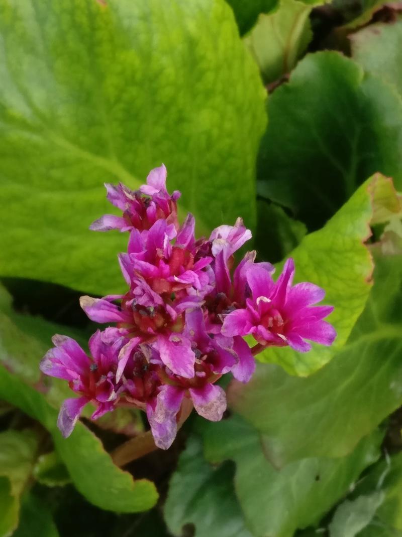 qq fleurs du jardin Img_2506
