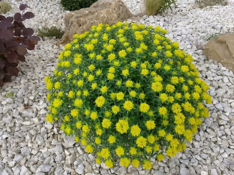 qq fleurs du jardin Img_2507