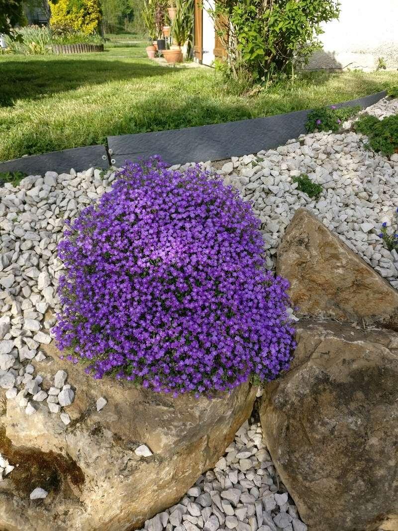 qq fleurs du jardin Img_2508
