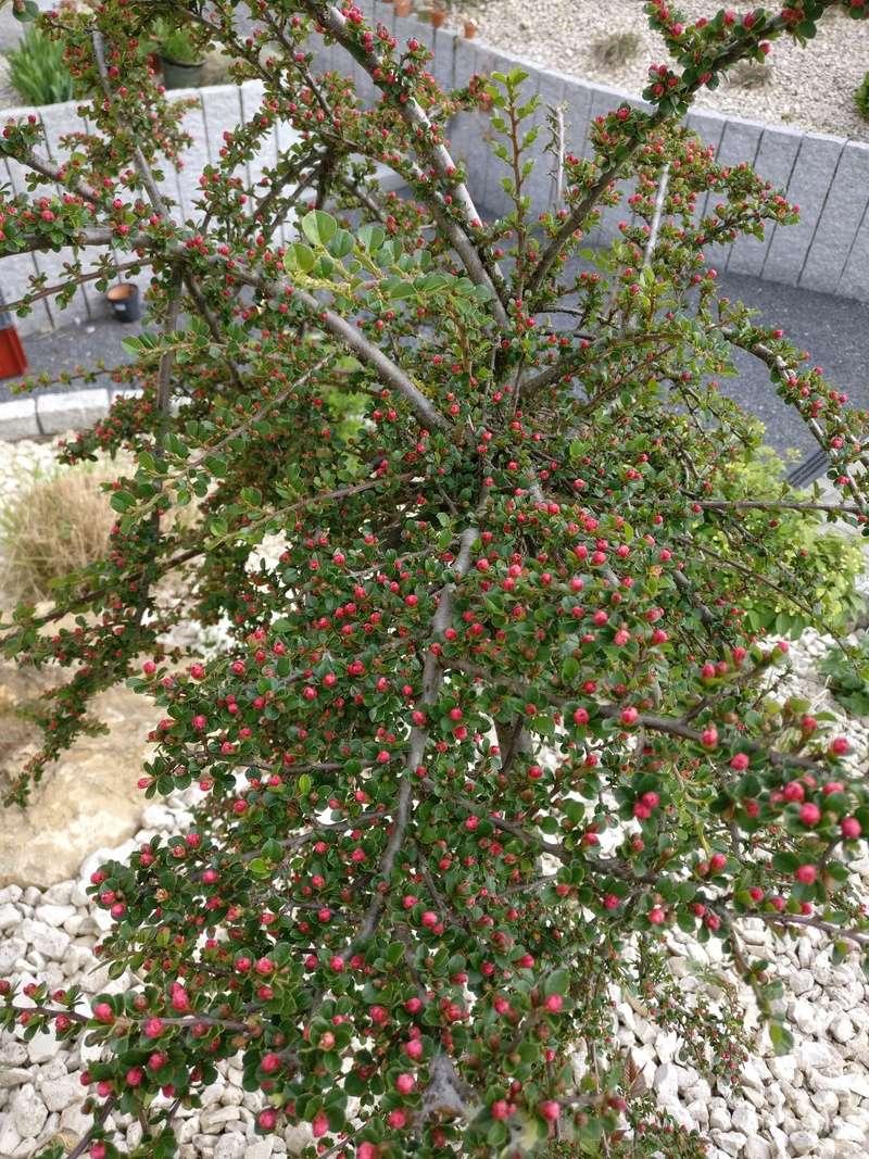 qq fleurs du jardin Img_2509