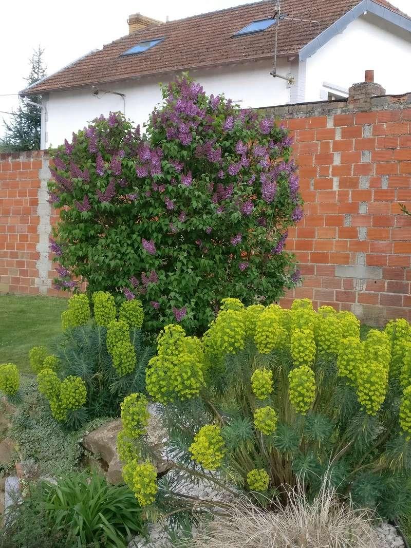qq fleurs du jardin Img_2511