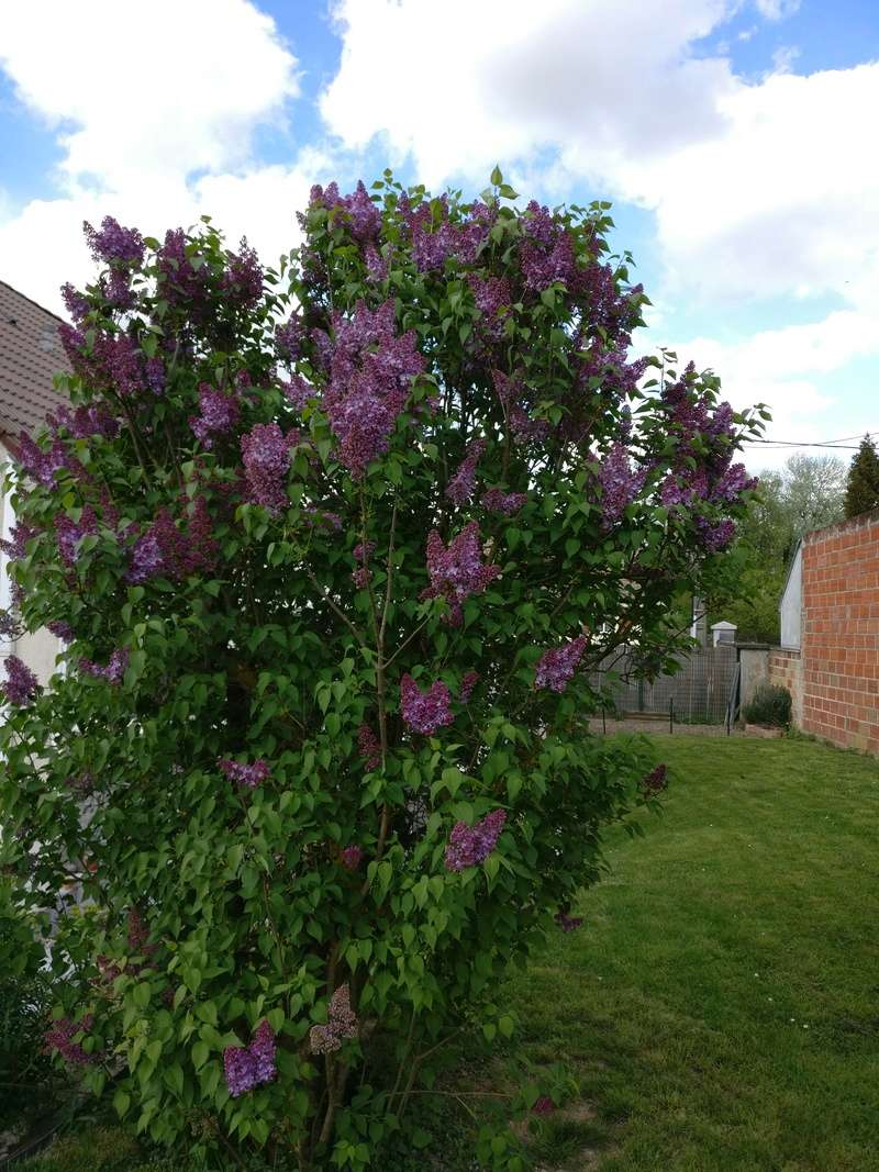 qq fleurs du jardin Img_2512