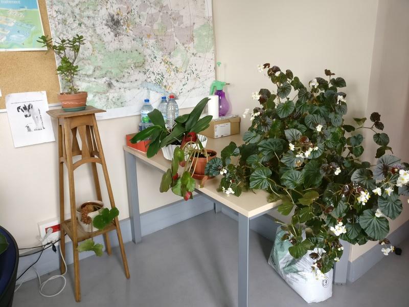 les plantes dans mon bureau Img_2514