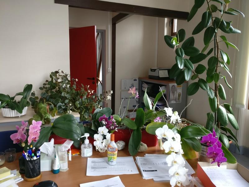 les plantes dans mon bureau Img_2515