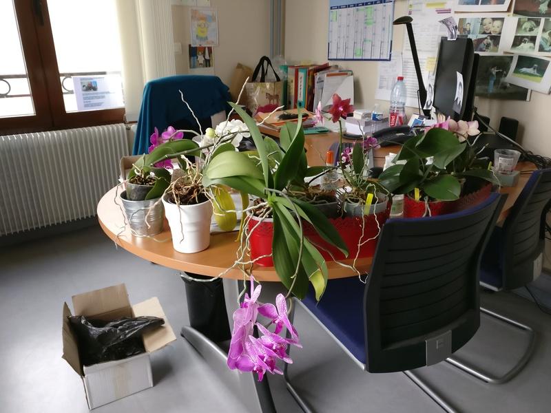 les plantes dans mon bureau Img_2516