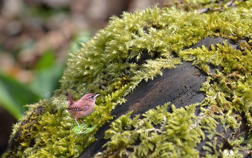 Un visiteur tout mignon dans la mousse ... A2018_18