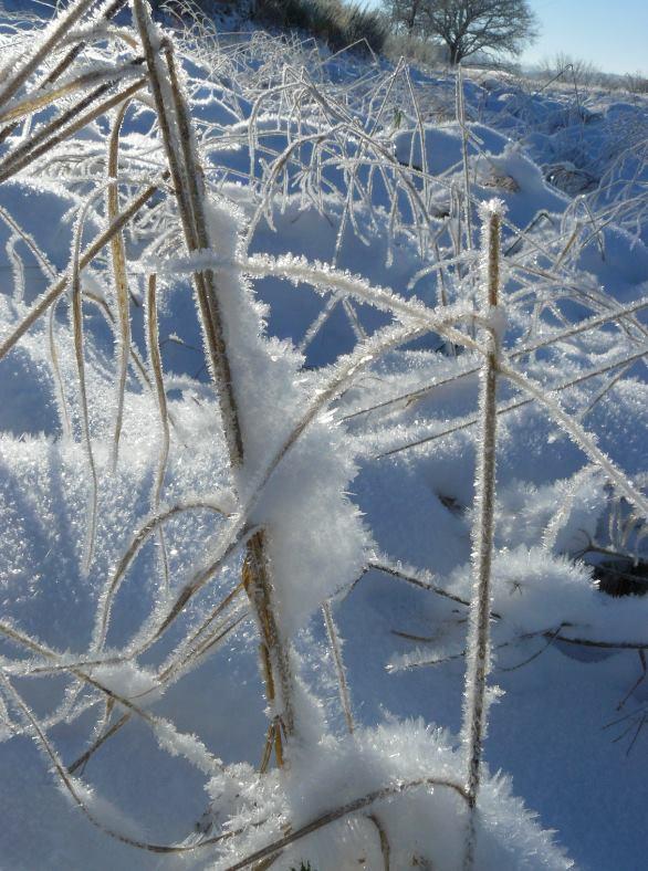 """Concours  """"L'hiver des fous jardiniers""""-Participations Ok10"""
