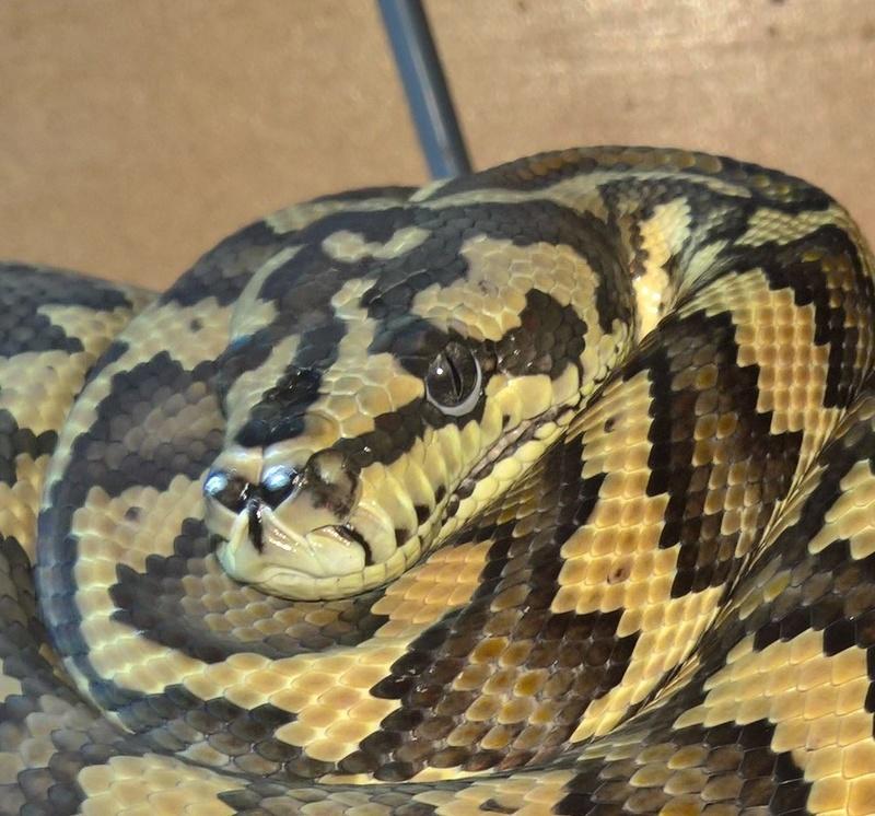 Mr Snake postule [ACCEPTE] - Page 3 13920410