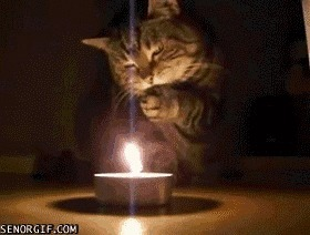 The New Catchat Thread [2] - Page 28 Candle10