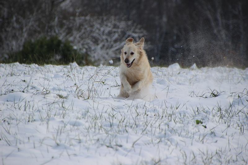 neige en Limousin Img_1113