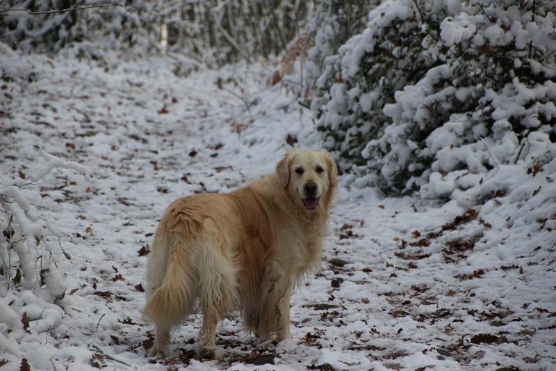 neige en Limousin Img_1114