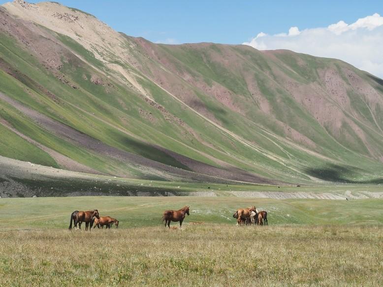 Des poneys et des photos dans les Landes P8090911