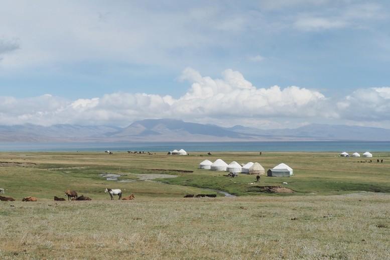 Des poneys et des photos dans les Landes P8170110