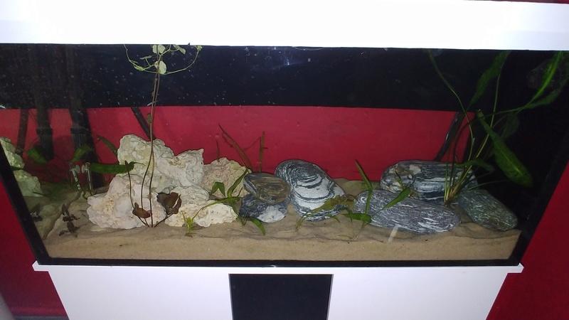 mes aquariums à gobies  20180510