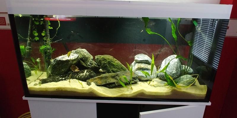 mes aquariums à gobies  20180532
