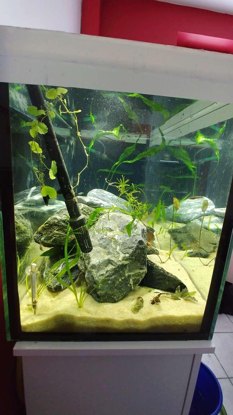 mes aquariums à gobies  20180539