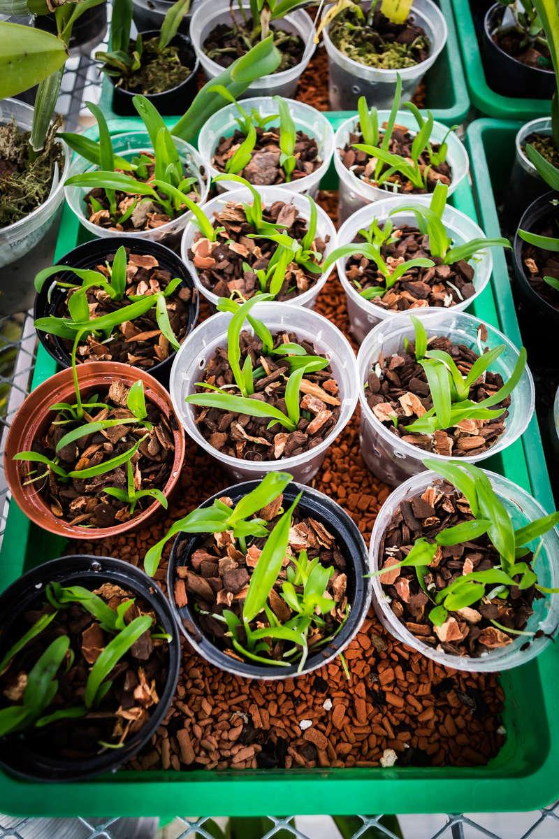 Orchideen-Neuzugang - Seite 38 26111713