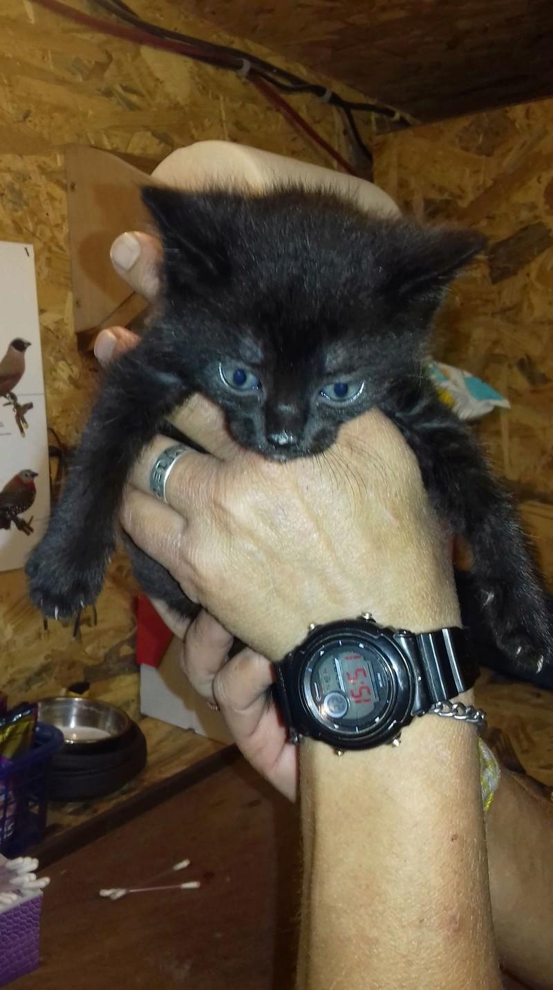 Bagherra - femelle - réservée adoption par sa FA (68) Baxter10