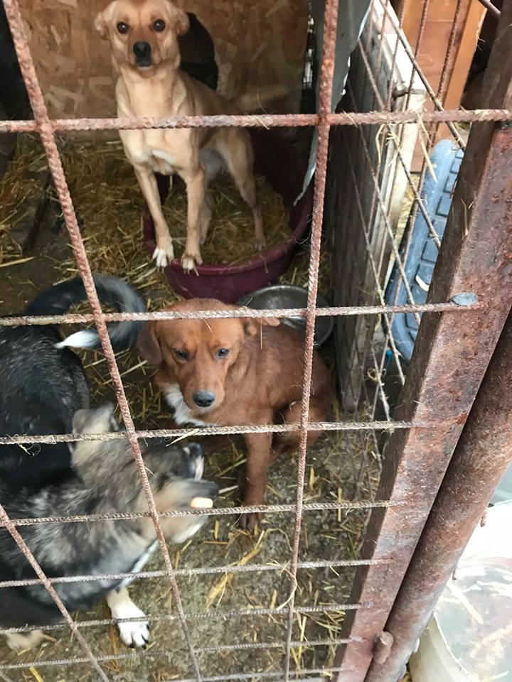 Benny - mâle - refuge de Târgu Frumos - adopté en Hollande Benny_14
