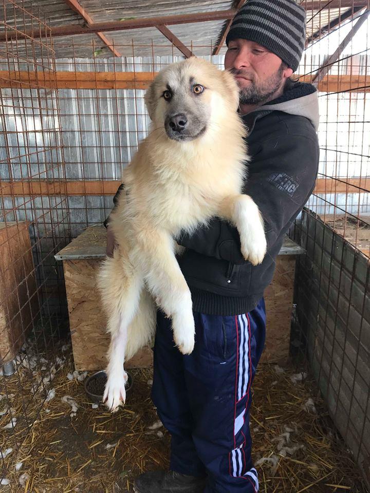 Baïkal (ex-Bianco) - mâle - refuge de Târgu Frumos - adopté par sa  FA (67) Bianco10