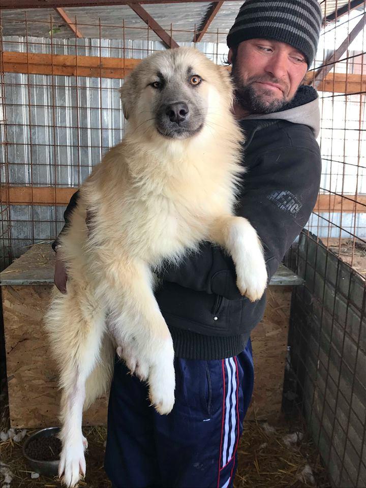 Baïkal (ex-Bianco) - mâle - refuge de Târgu Frumos - adopté par sa  FA (67) Bianco11