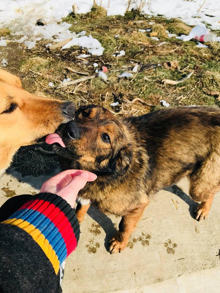 Mila (ex-Brownie) - femelle - refuge de Târgu Frumos  - adoptée (67) Browni24