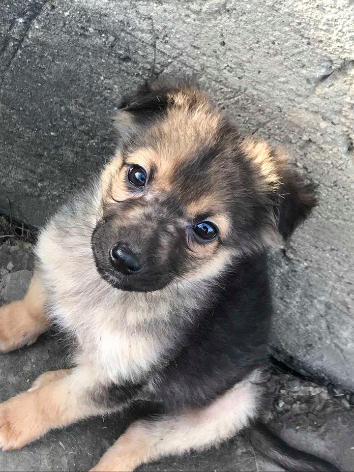 Olaf (Ex Coco) - mâle - refuge de Târgu Frumos -  adoption (67) Coco_110