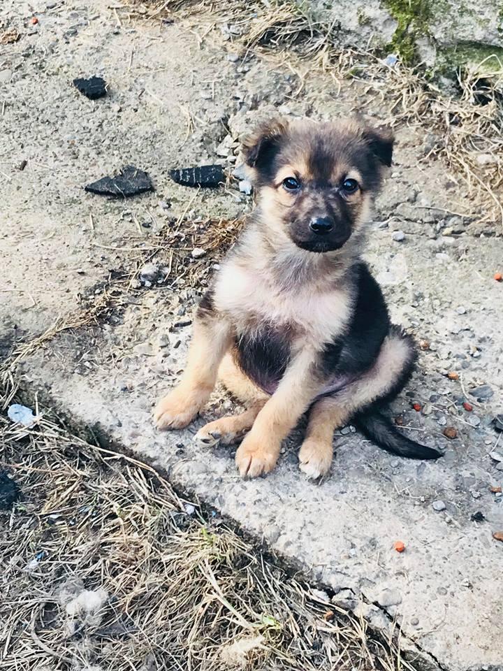 Olaf (Ex Coco) - mâle - refuge de Târgu Frumos -  adoption (67) Coco_210
