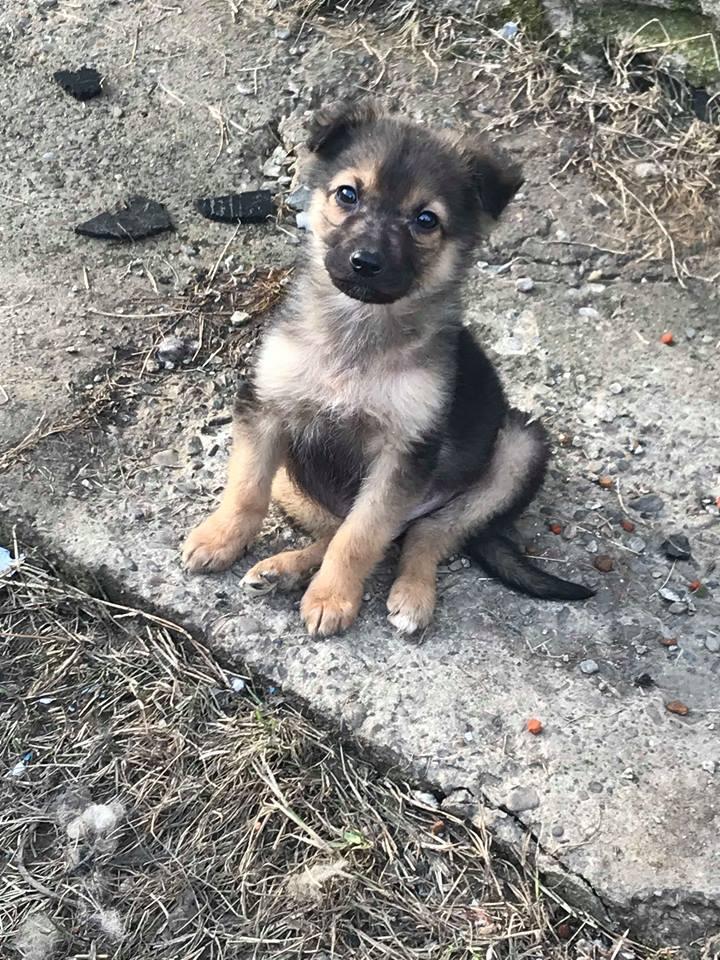 Olaf (Ex Coco) - mâle - refuge de Târgu Frumos -  adoption (67) Coco_310