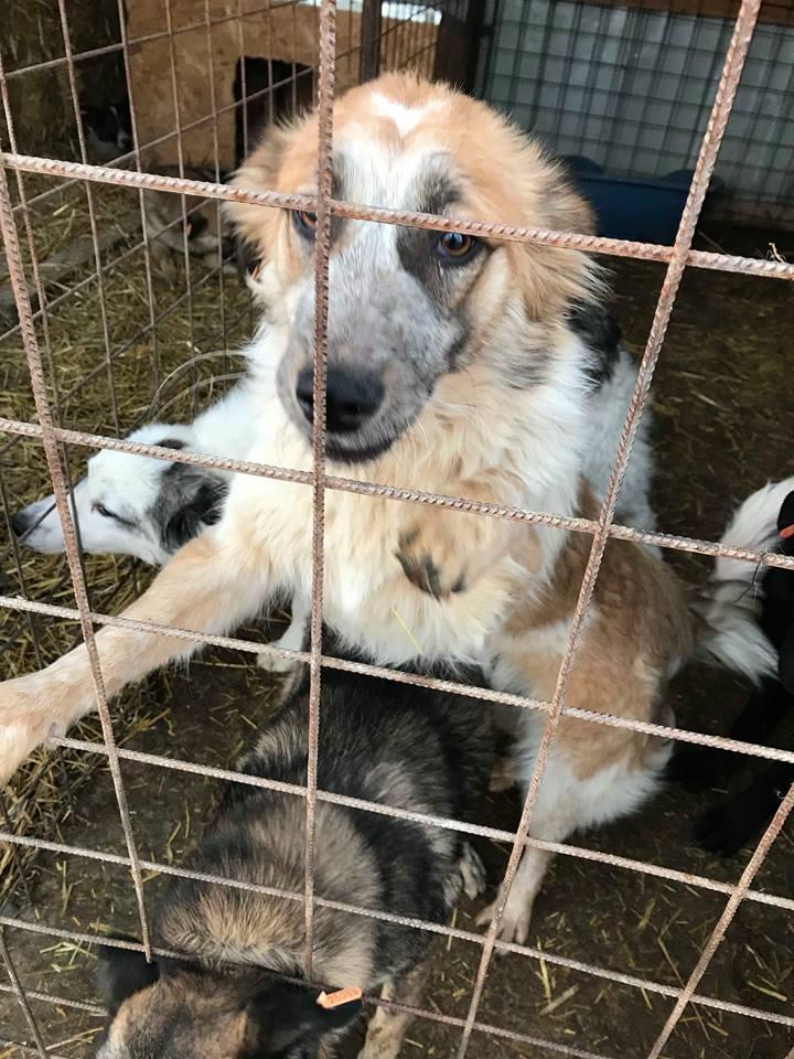 Láska (ex-Dana) - femelle - refuge de Târgu Frumos - réservée adoption (88) Dana_110