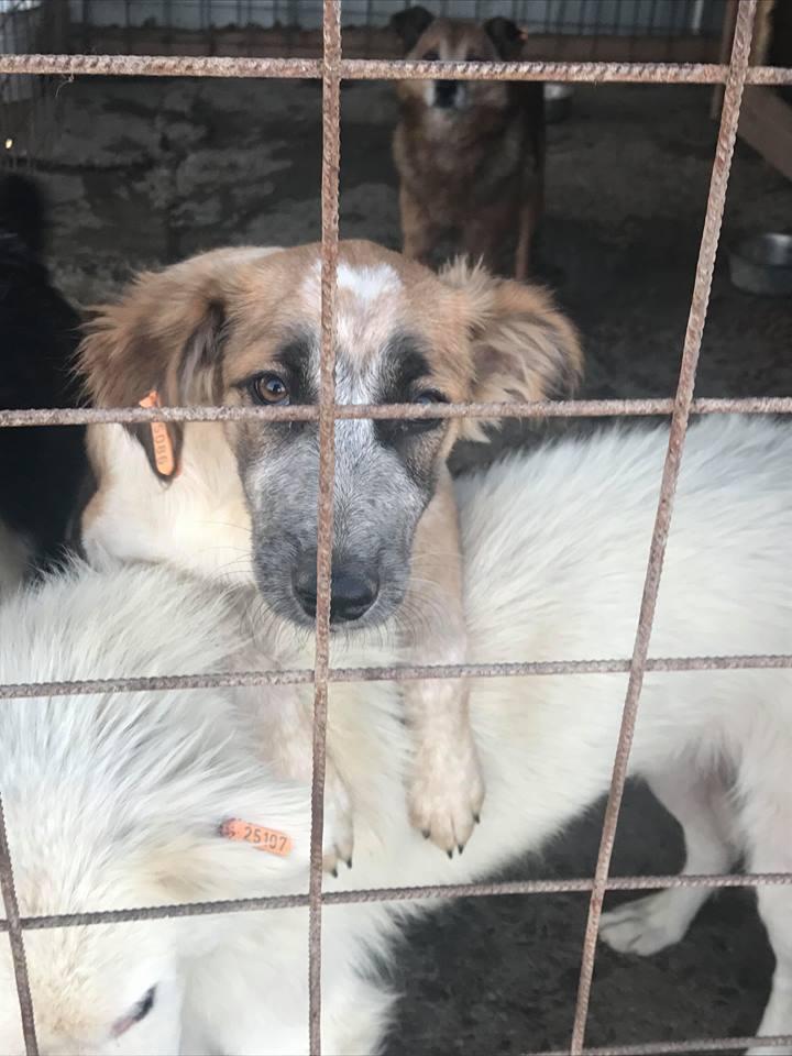 Láska (ex-Dana) - femelle - refuge de Târgu Frumos - réservée adoption (88) Dana_113