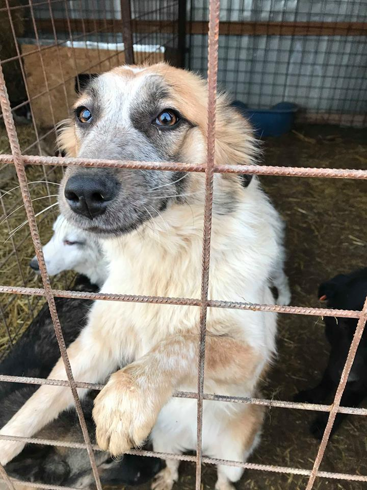 Láska (ex-Dana) - femelle - refuge de Târgu Frumos - réservée adoption (88) Dana_310