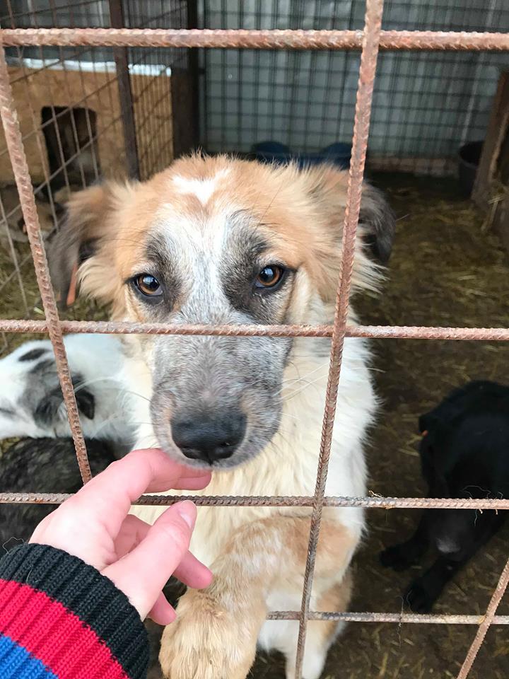 Láska (ex-Dana) - femelle - refuge de Târgu Frumos - réservée adoption (88) Dana_510