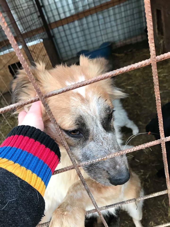 Láska (ex-Dana) - femelle - refuge de Târgu Frumos - réservée adoption (88) Dana_610