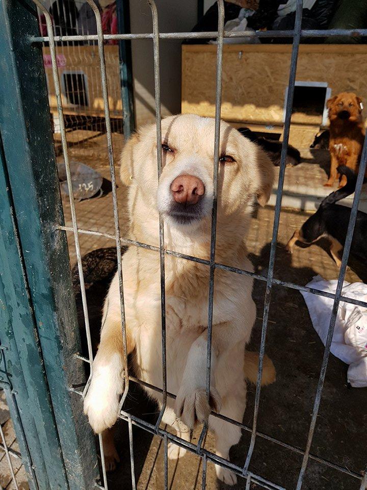 Dolce Vita - femelle - adoptée en Roumanie Dolce_12