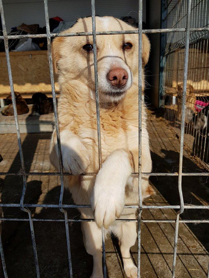 Dolce Vita - femelle - adoptée en Roumanie Dolce_22
