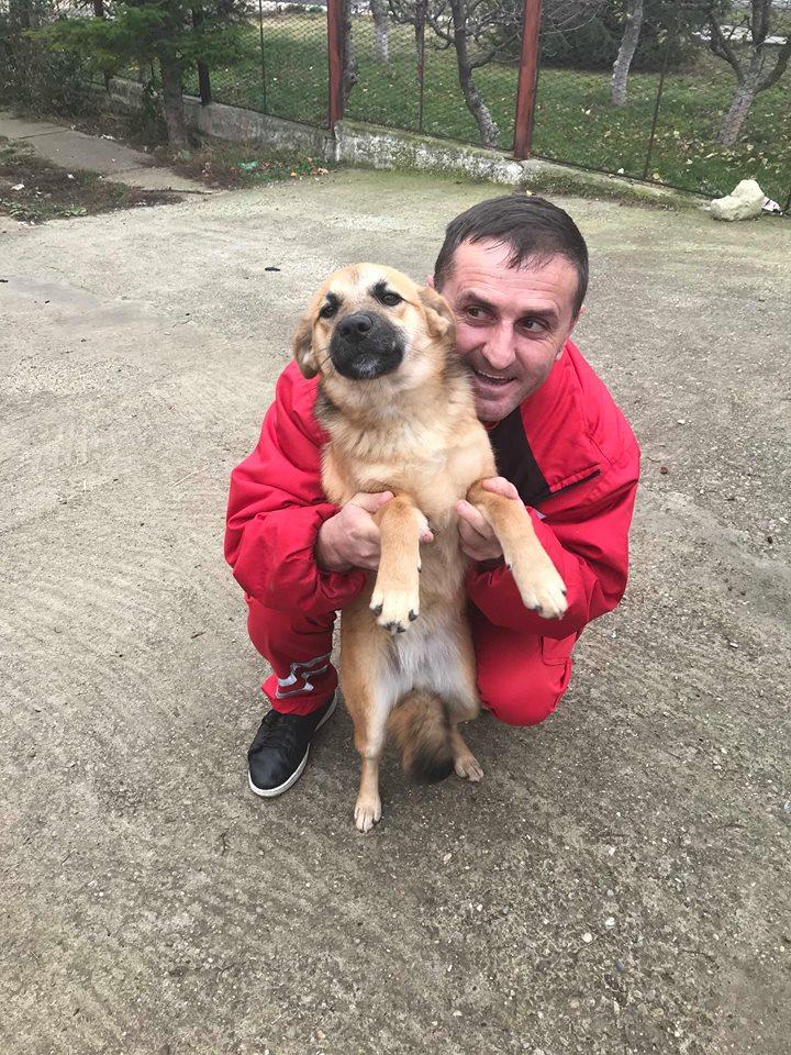 Lili (ex-Gigi) - femelle - refuge de Târgu Frumos - Adoptée(dept 67) Gigi_112