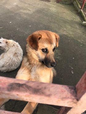 Lili (ex-Gigi) - femelle - refuge de Târgu Frumos - Adoptée(dept 67) Gigi_116