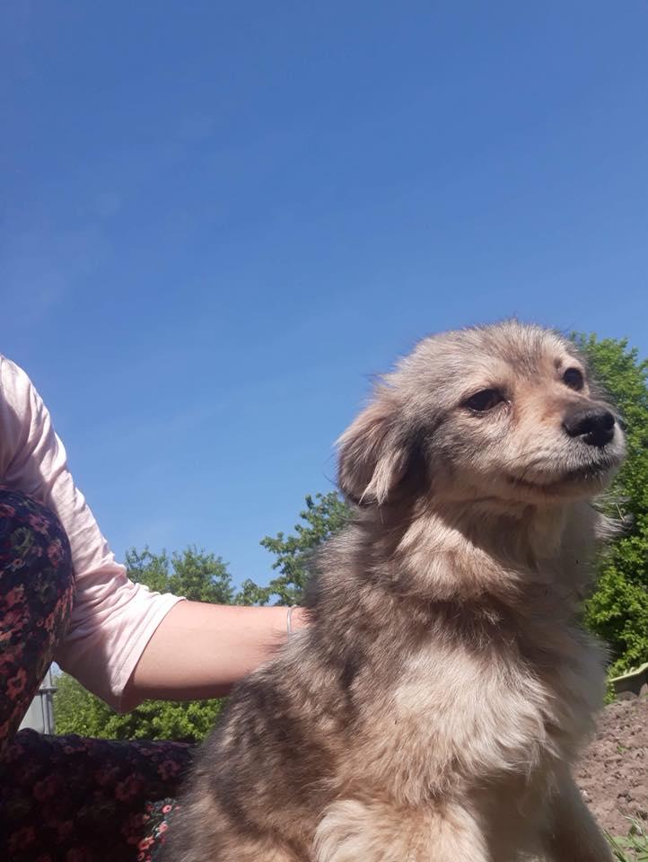 Hinouk - femelle - Târgu Frumos - réservée adoption (57) Hinouk10