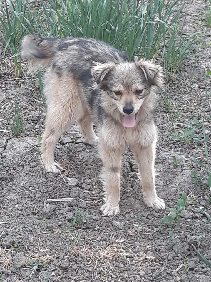 Hinouk - femelle - Târgu Frumos - réservée adoption (57) Hinouk13