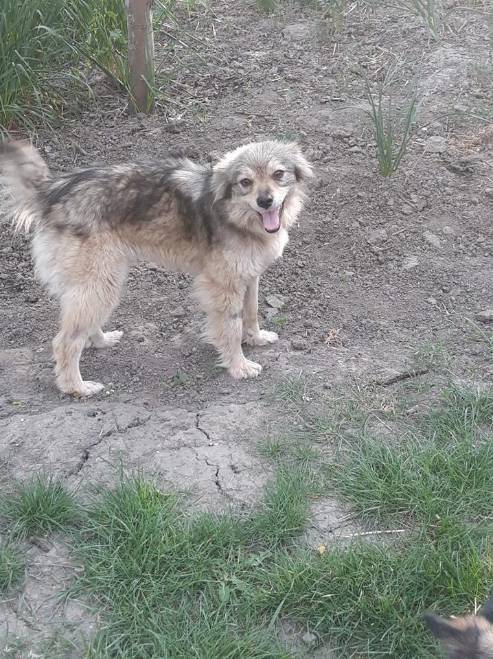 Hinouk - femelle - Târgu Frumos - réservée adoption (57) Hinouk14
