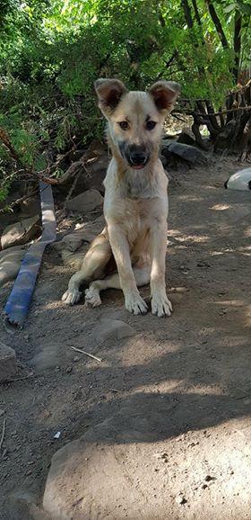 Hizia (Bella chez Rudy) - femelle - chez Rudy (Iasi) - réservée adoption (67) Hizia_10