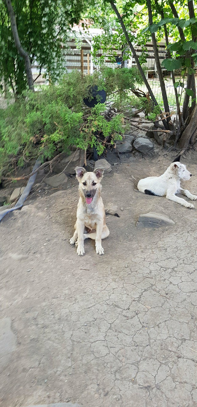Hizia (Bella chez Rudy) - femelle - chez Rudy (Iasi) - réservée adoption (67) Hizia_14