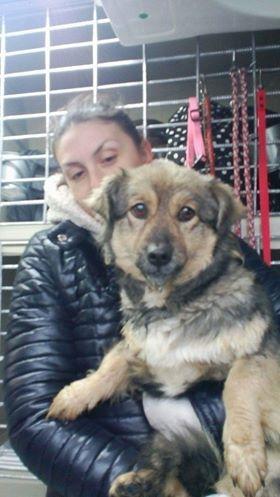 Ellie (ex-Lady) - femelle - refuge de Târgu Frumos - réservée adoption en France Lady_811