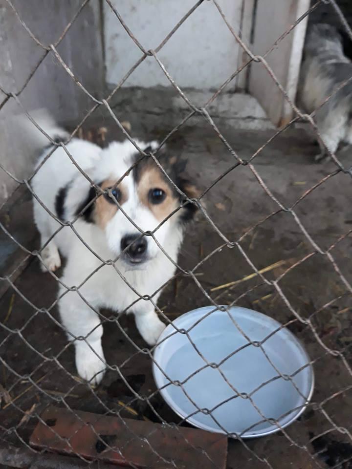 Luna (ex-Lara) - femelle - refuge de Târgu Frumos  - réservée adoption (68) Lady_p13