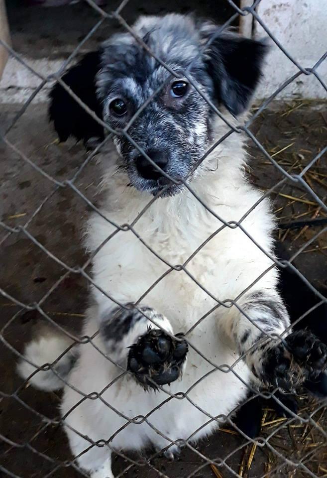 Lexi - femelle - refuge de Târgu Frumos - réservé adoption Hollande Lady_p14