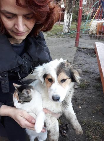 Lyria (ex-Janneke) - femelle - refuge de Târgu Frumos - réservée Adoption (dept 68) Lara_411