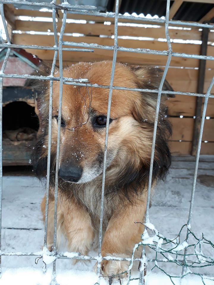 Simba (ex-Leutu) - mâle à Târgu Frumos - réservé adoption Leutu_10