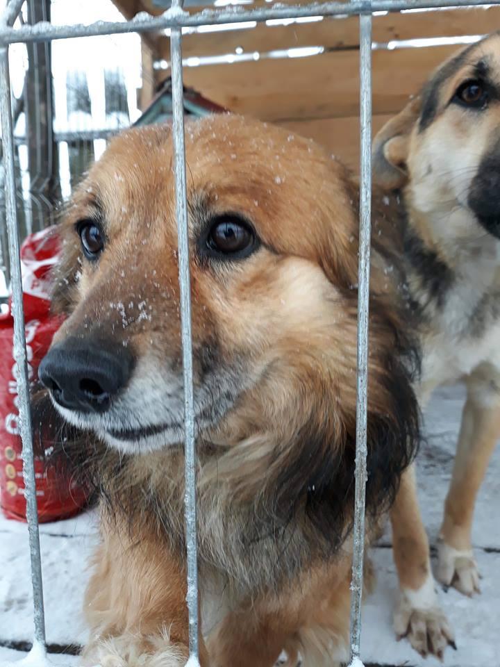 Simba (ex-Leutu) - mâle à Târgu Frumos - réservé adoption Leutu_11