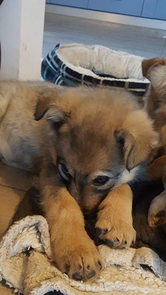 Namka (ex Loufka) - femelle - refuge de Târgu Frumos - réservée adoption Loufka10